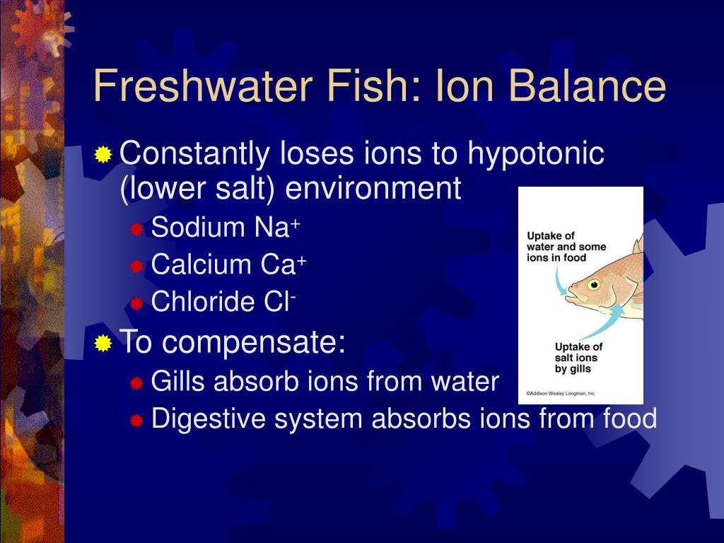 Freshwater Fish: Ion Balance