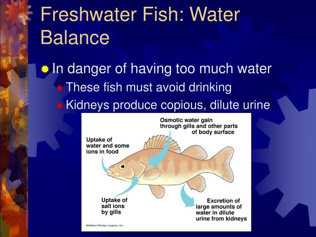 Freshwater Fish: Water Balance