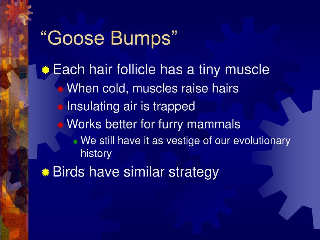 """Goose Bumps"""