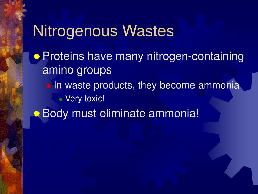 Nitrogenous Wastes