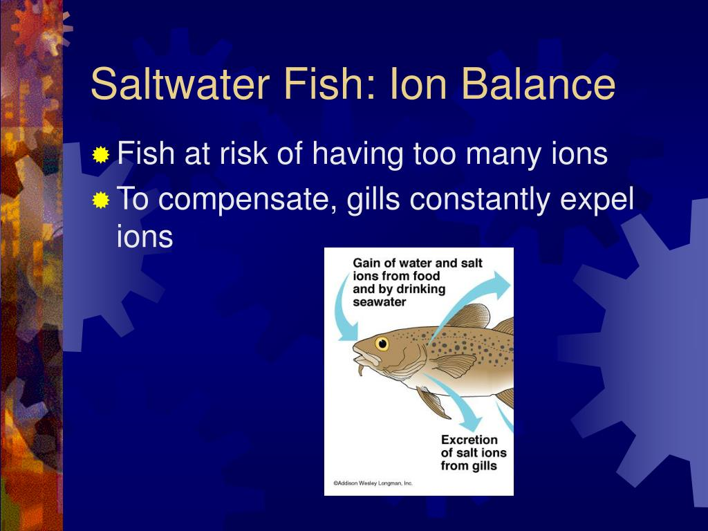 Saltwater Fish: Ion Balance