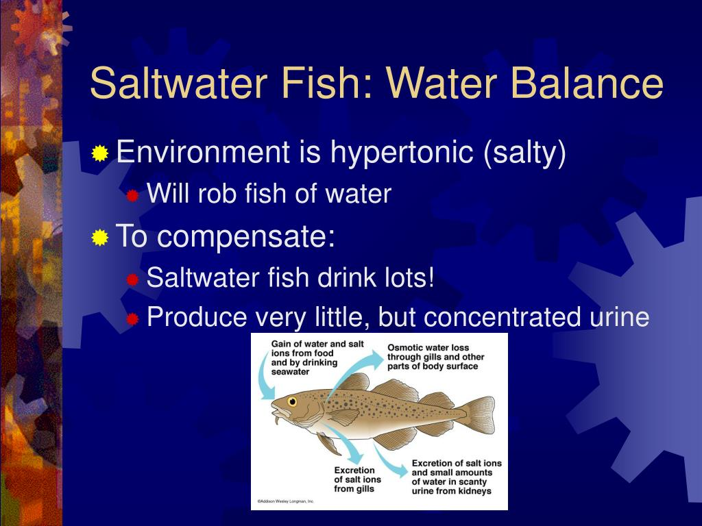 Saltwater Fish: Water Balance