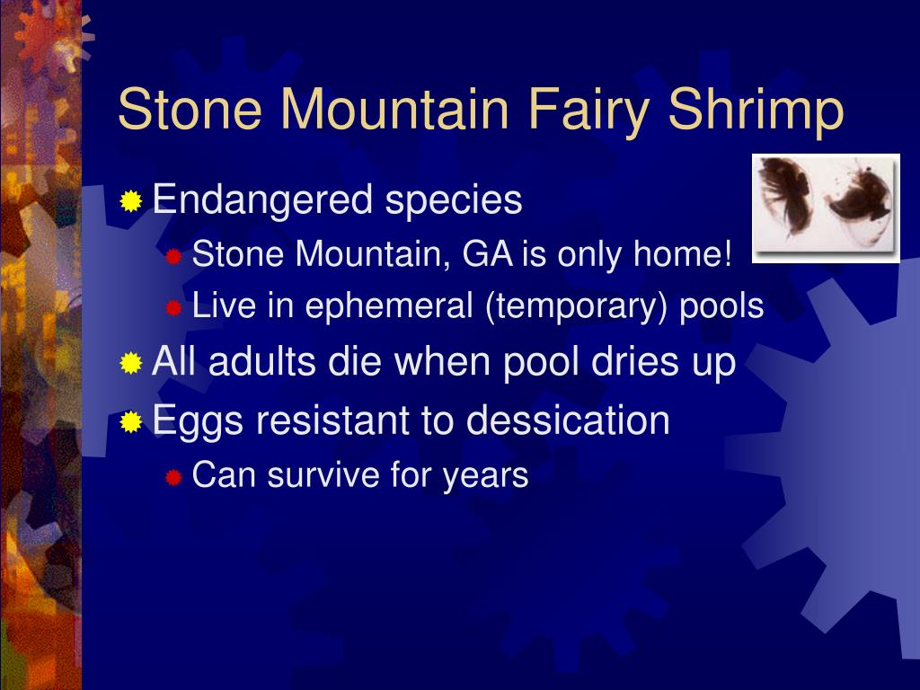 Stone Mountain Fairy Shrimp