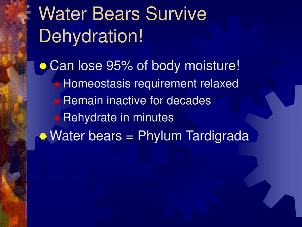 Water Bears Survive Dehydration!