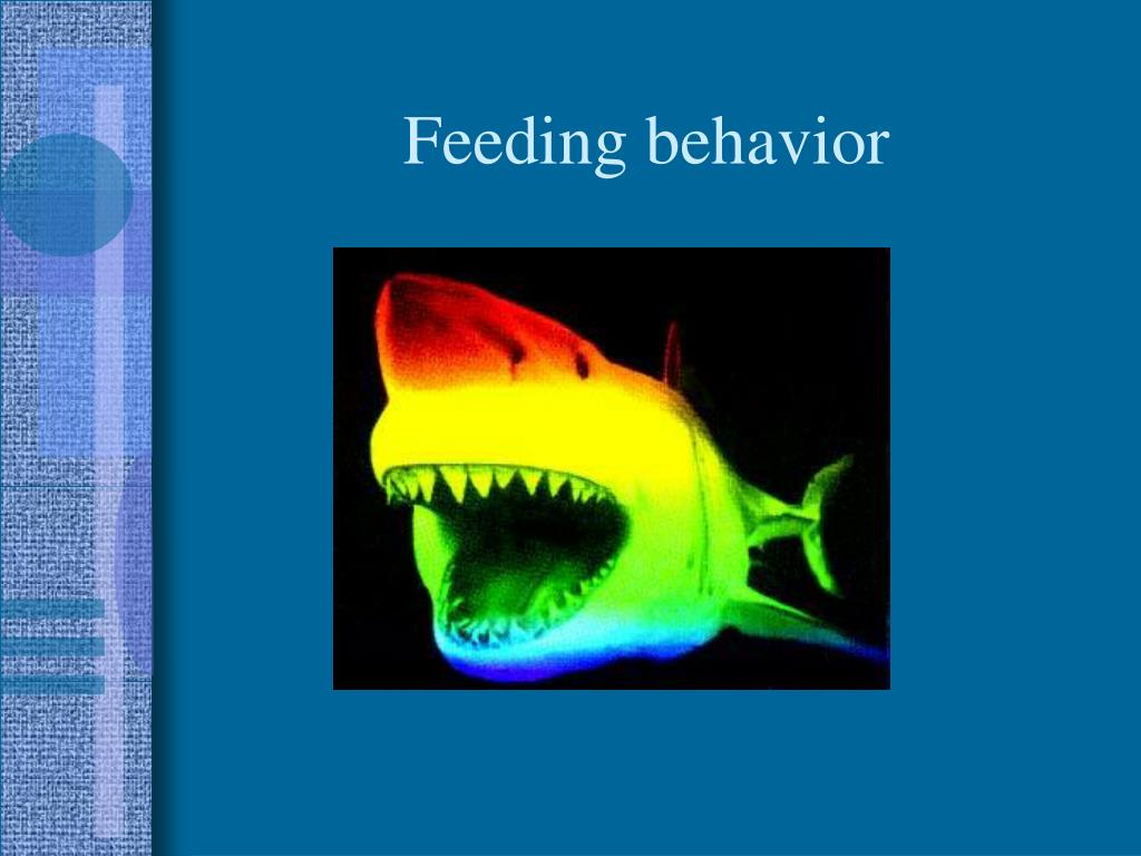 Feeding behavior