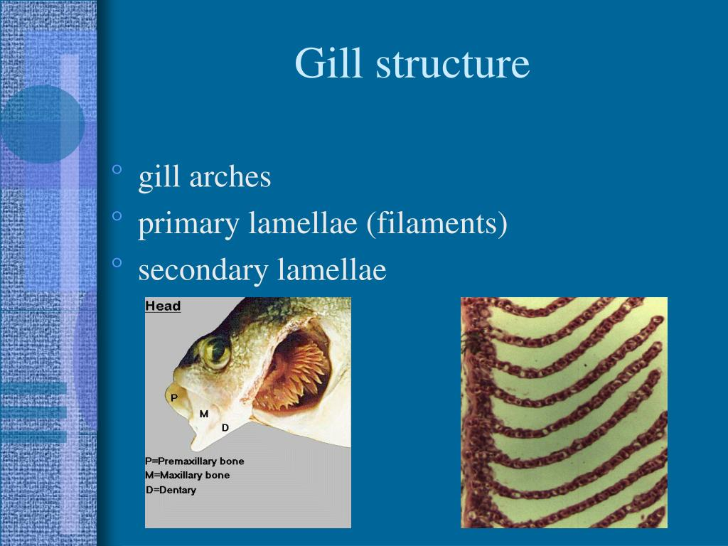 Gill structure