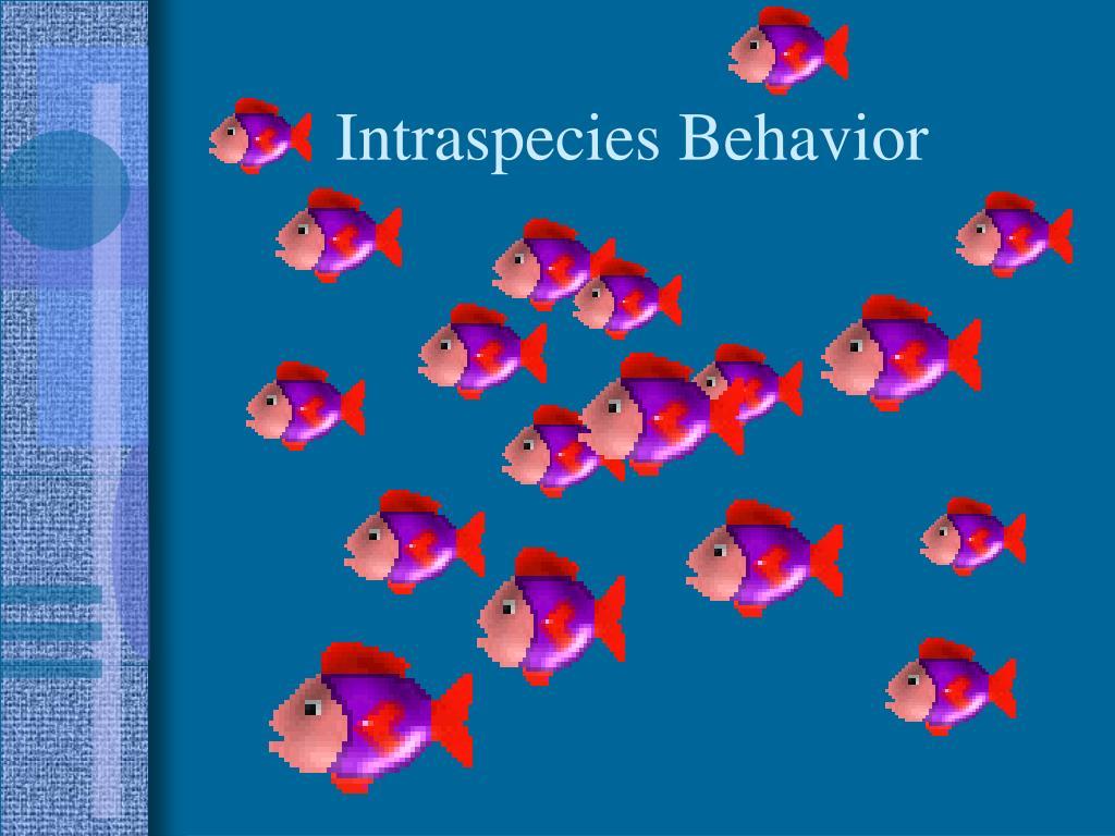 Intraspecies Behavior
