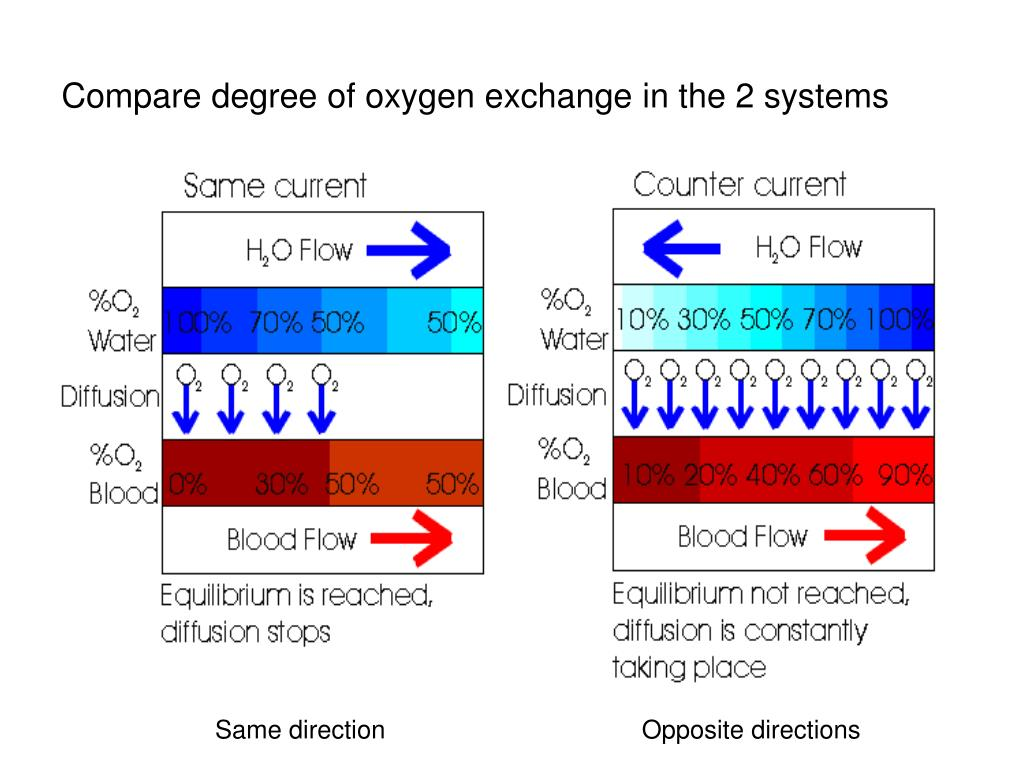 Compare degree of oxygen exchange in the 2 systems