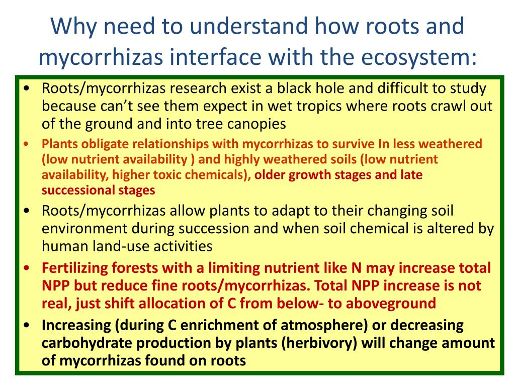 Why need to understand how roots and mycorrhizas interface with the ecosystem: