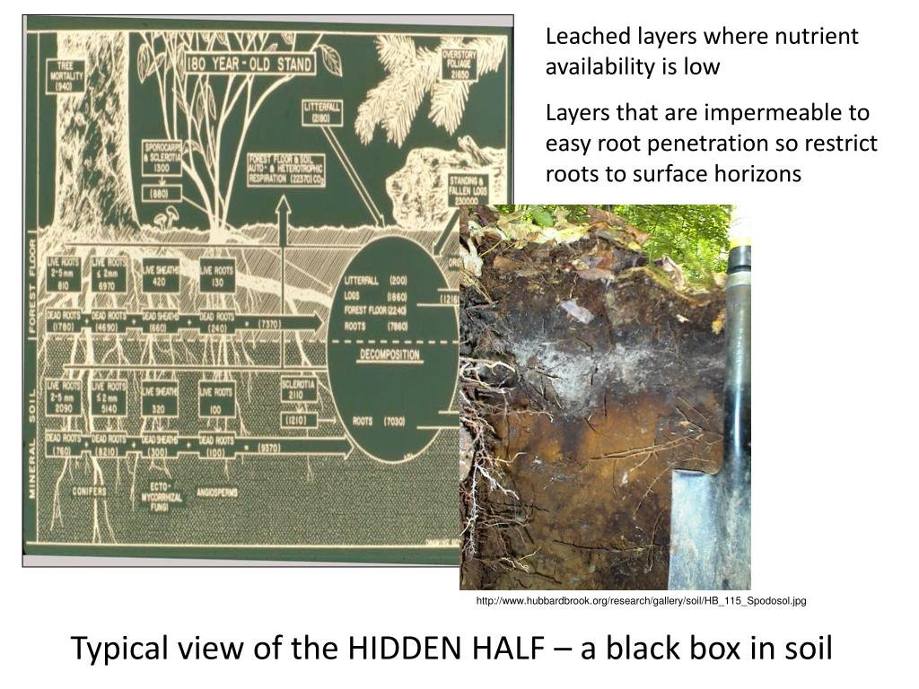 Leached layers where nutrient availability is low