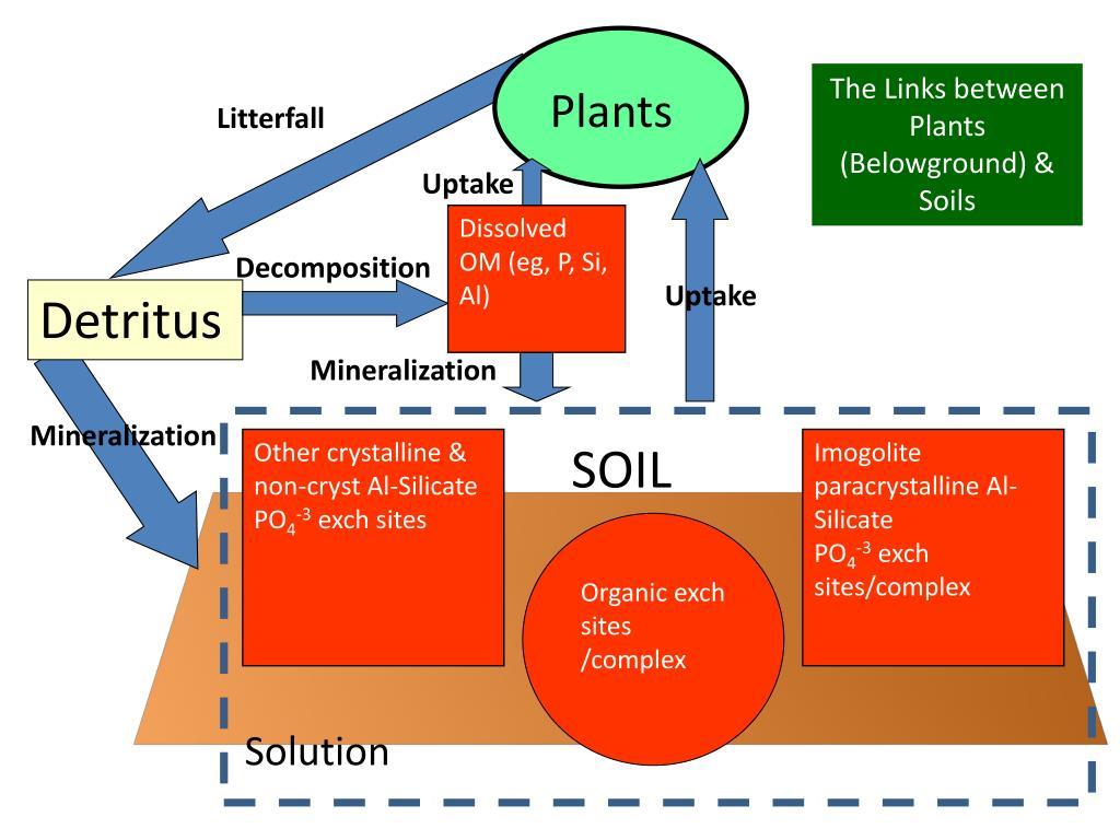 The Links between Plants (Belowground) & Soils