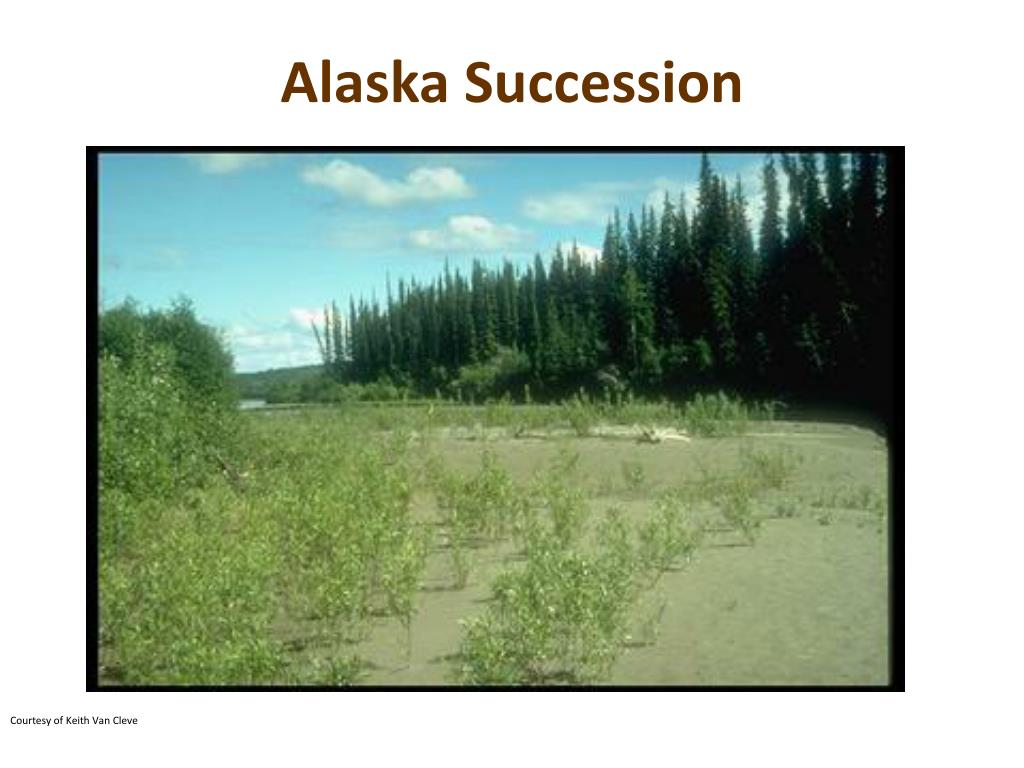 Alaska Succession
