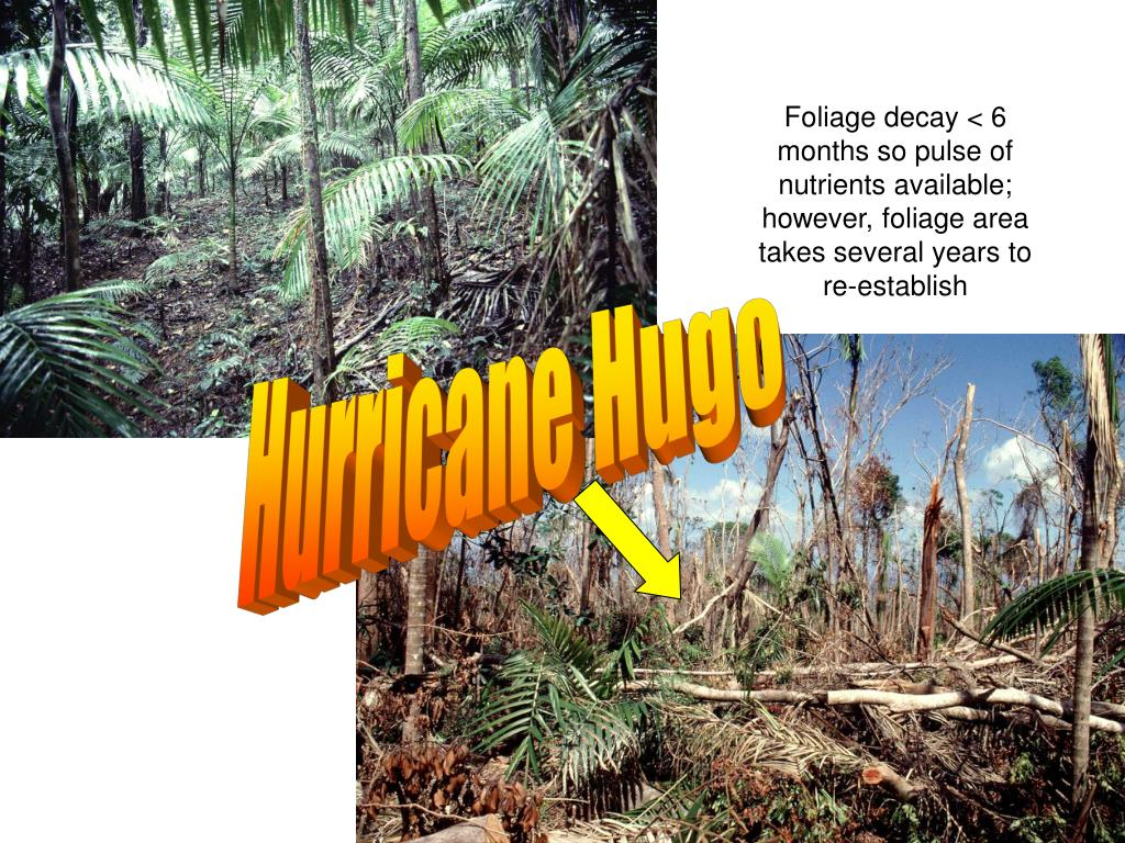 Foliage decay < 6 months so pulse of nutrients available; however, foliage area takes several years to re-establish