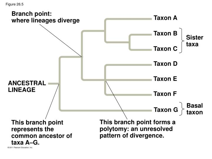 Branch point: