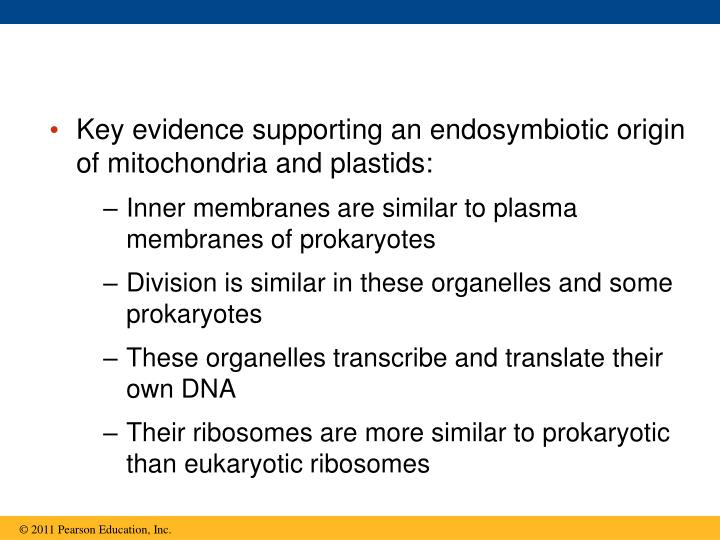 Key evidence supporting an endosymbiotic origin of mitochondria and plastids: