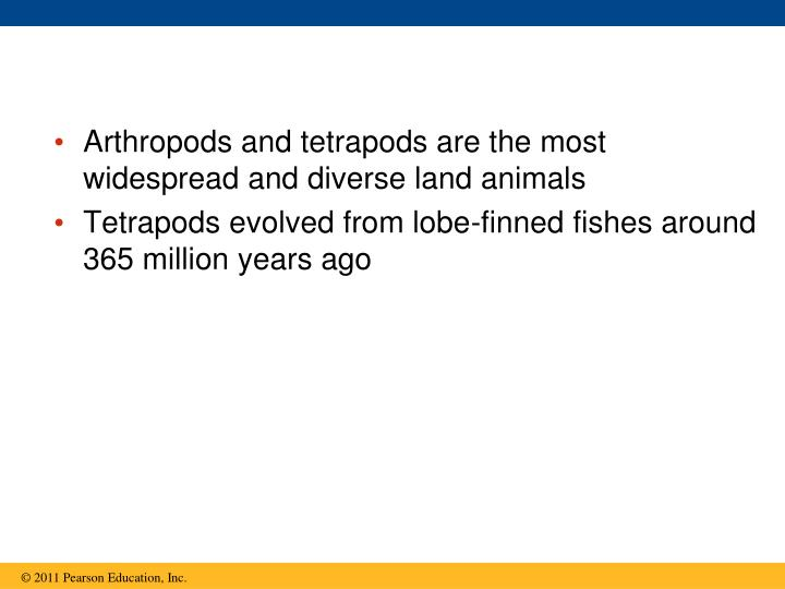 Arthropods and tetrapods are the most widespread and diverse land animals