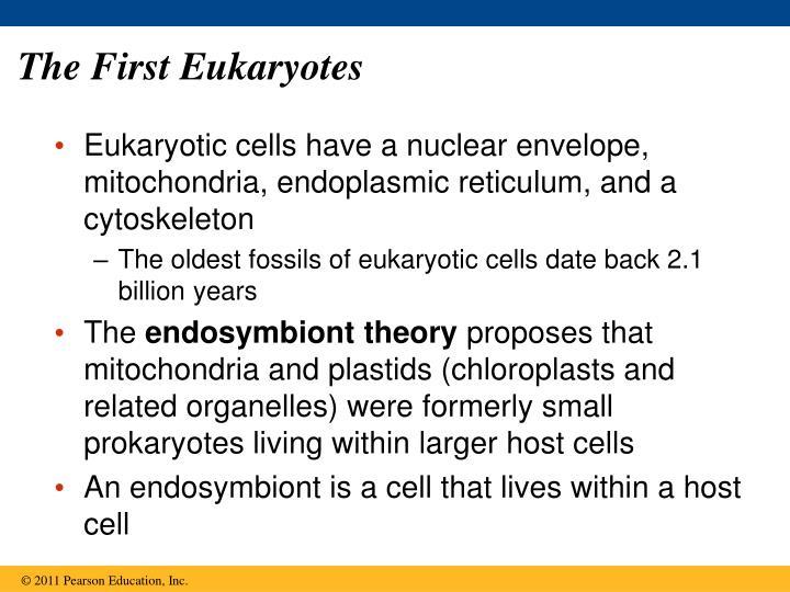 The First Eukaryotes
