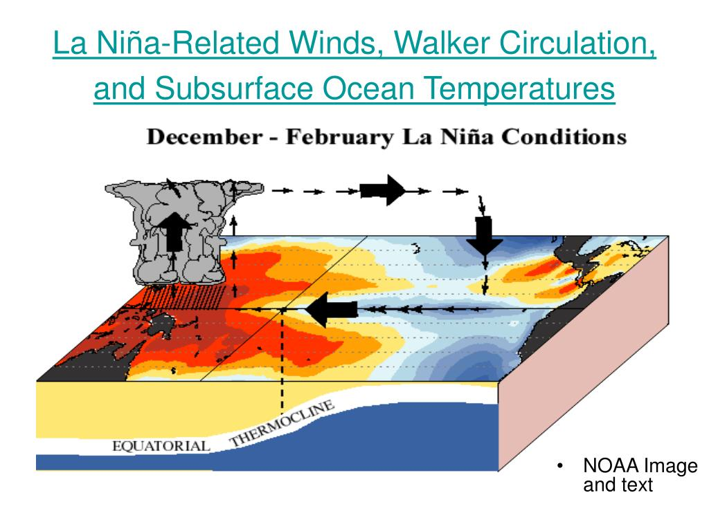 La Niña-Related Winds, Walker Circulation, and Subsurface Ocean Temperatures