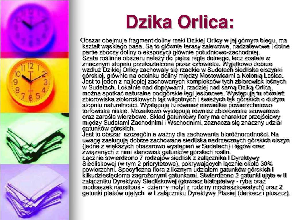 Dzika Orlica: