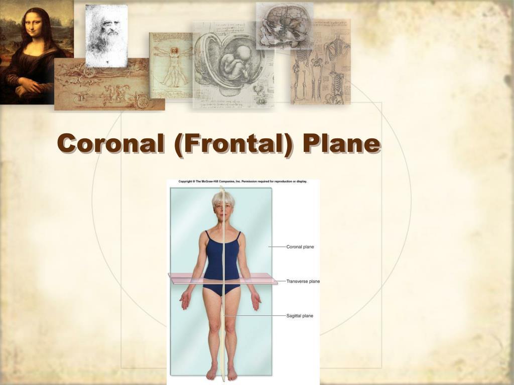 Coronal (Frontal) Plane