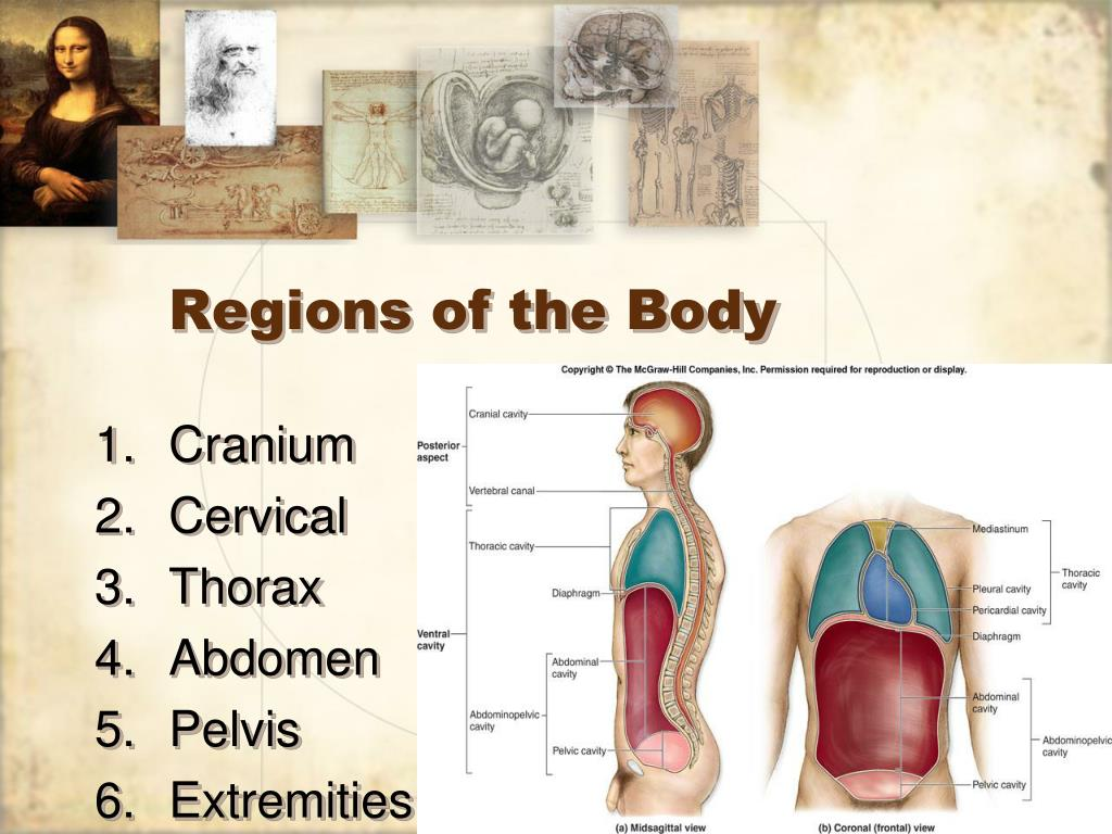 Regions of the Body