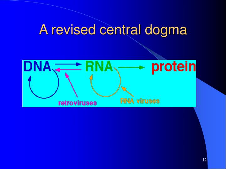 A revised central dogma