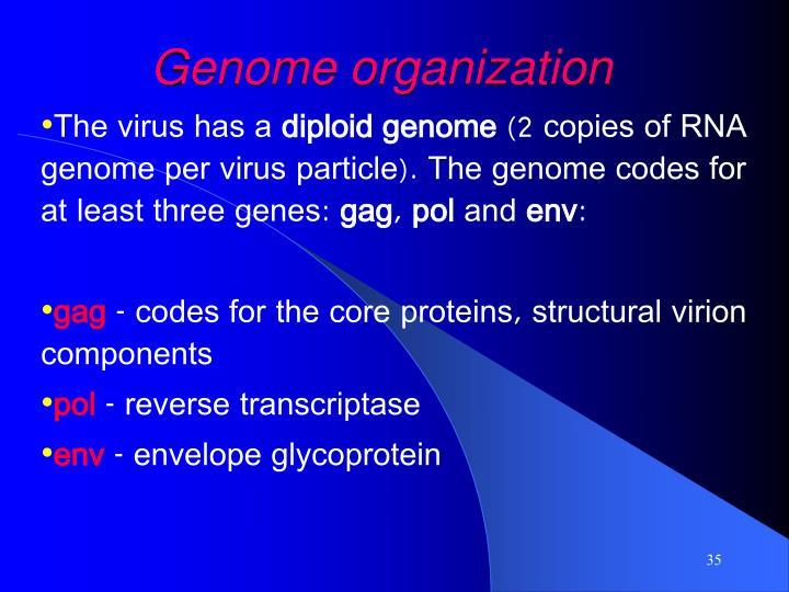 Genome organization