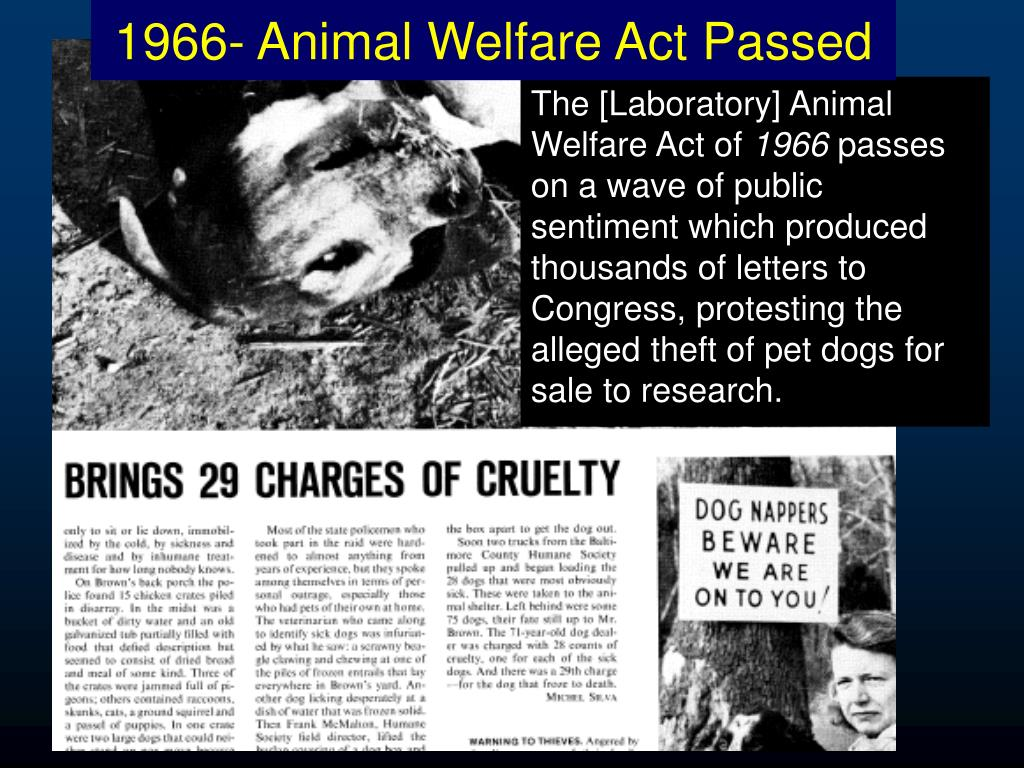 1966- Animal Welfare Act Passed