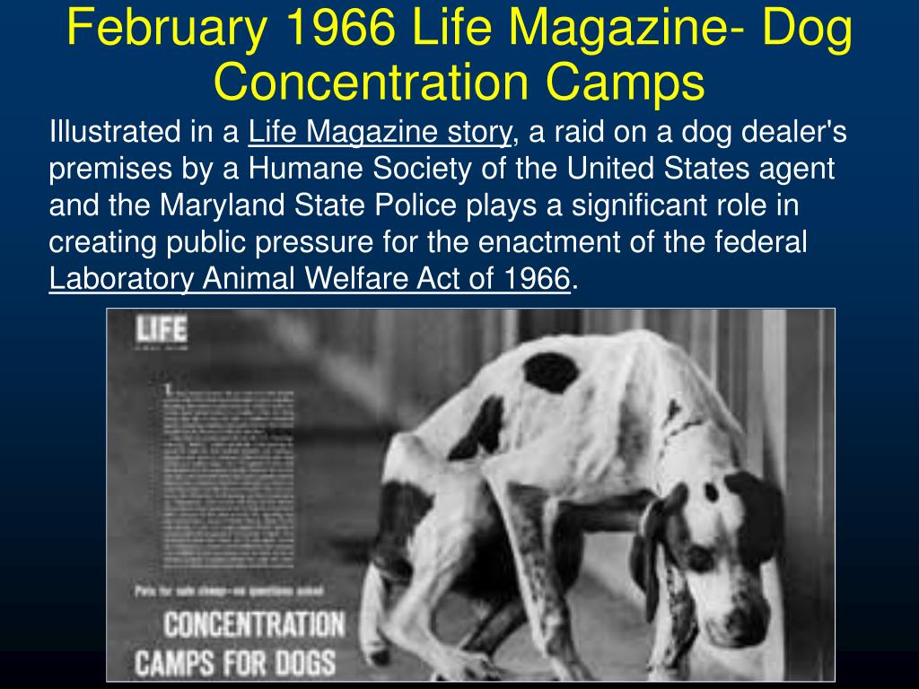 February 1966 Life Magazine- Dog Concentration Camps