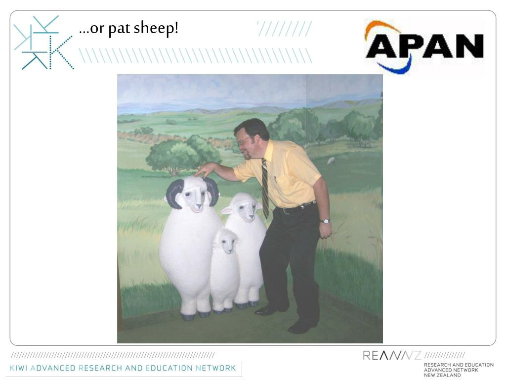 …or pat sheep!