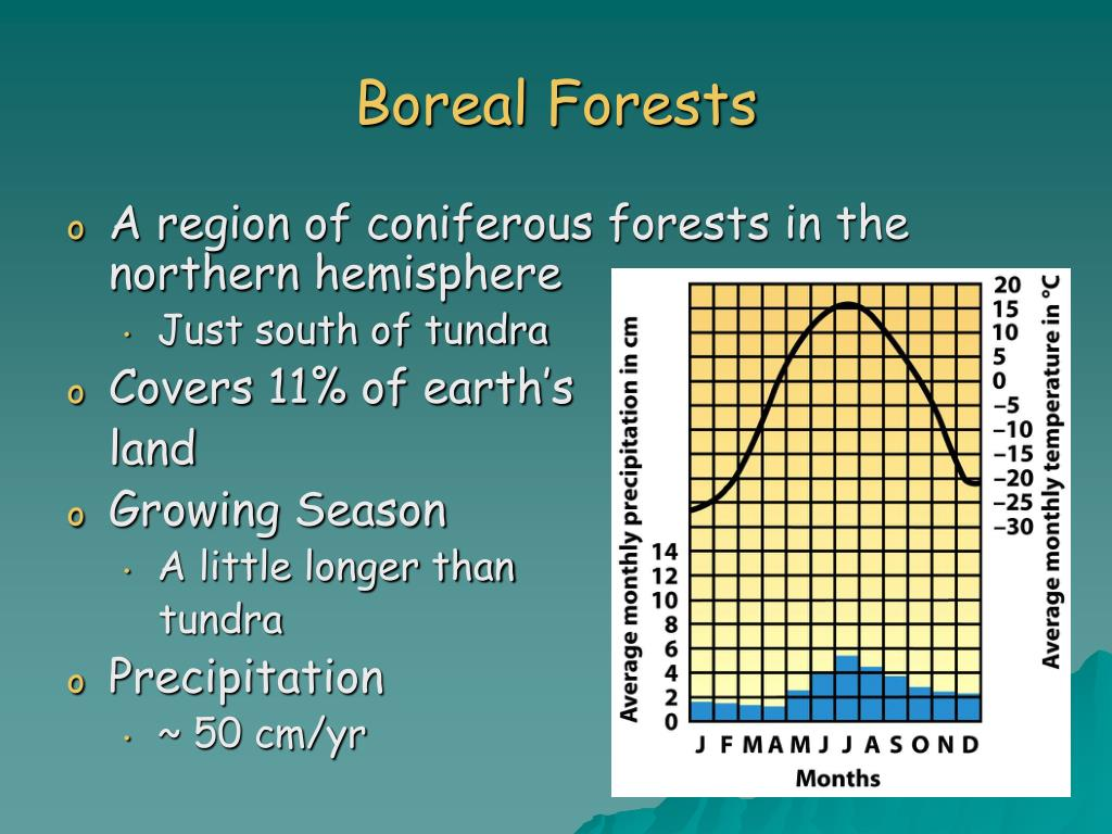 Boreal Forests
