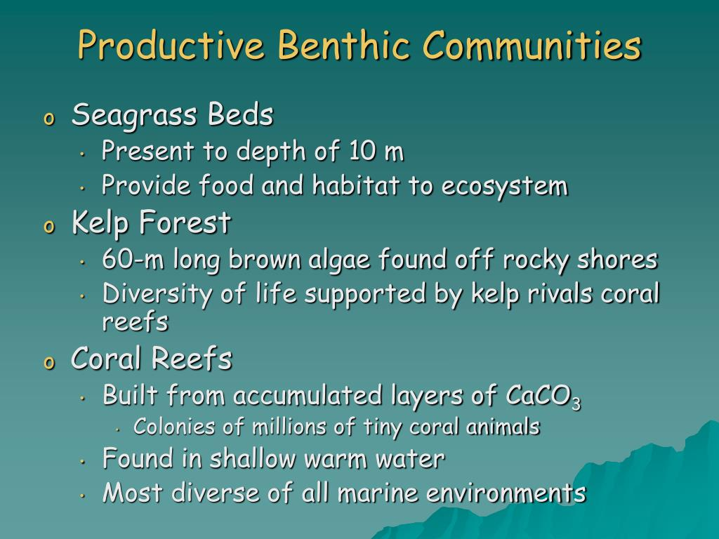 Productive Benthic Communities