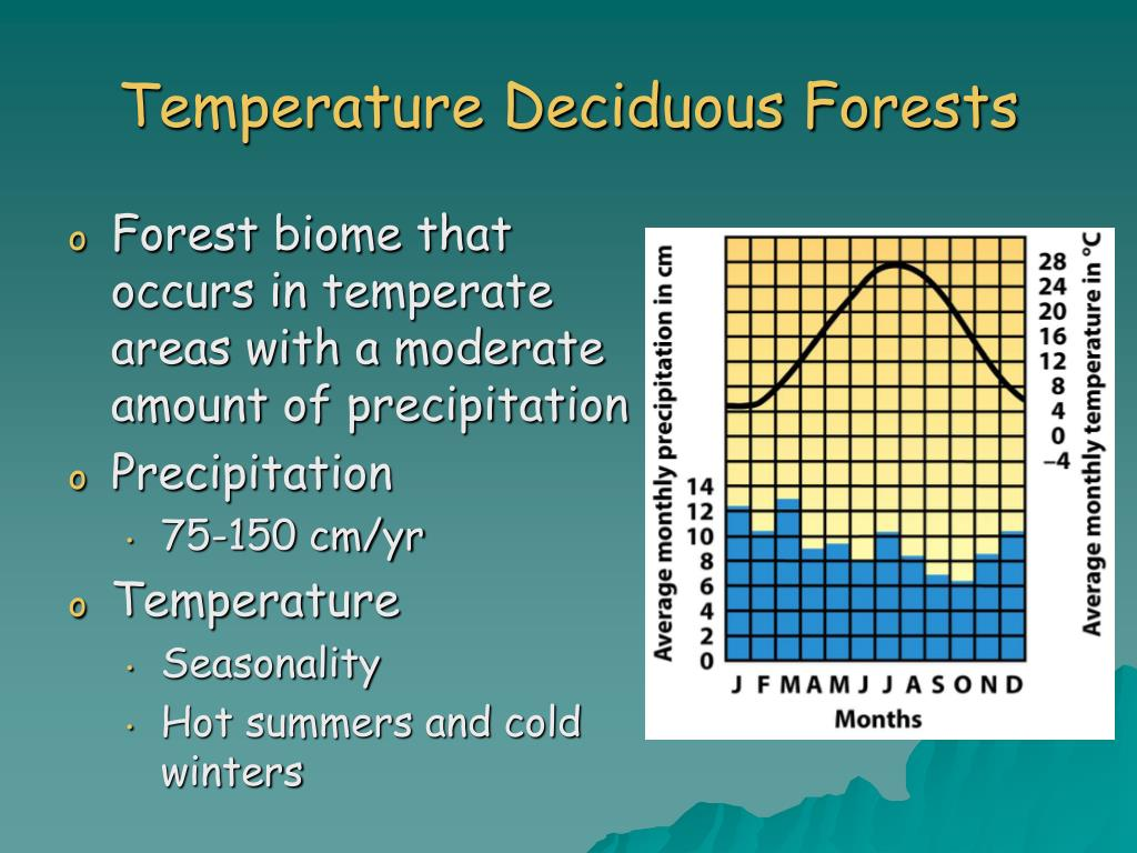 Temperature Deciduous Forests