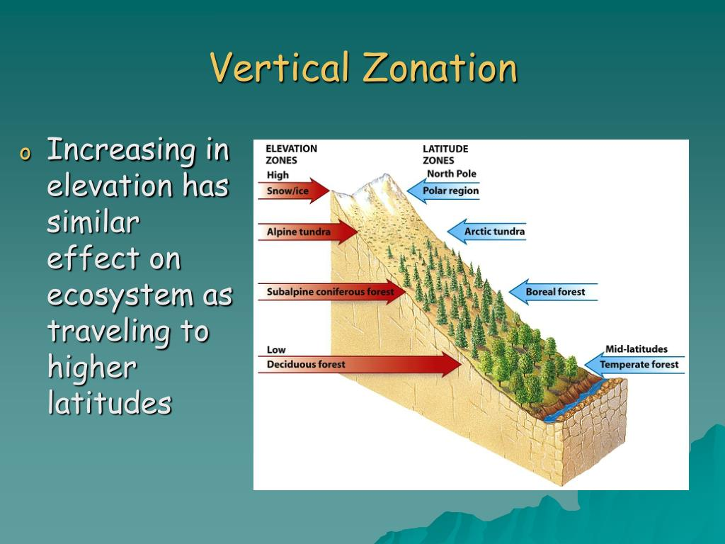 Vertical Zonation