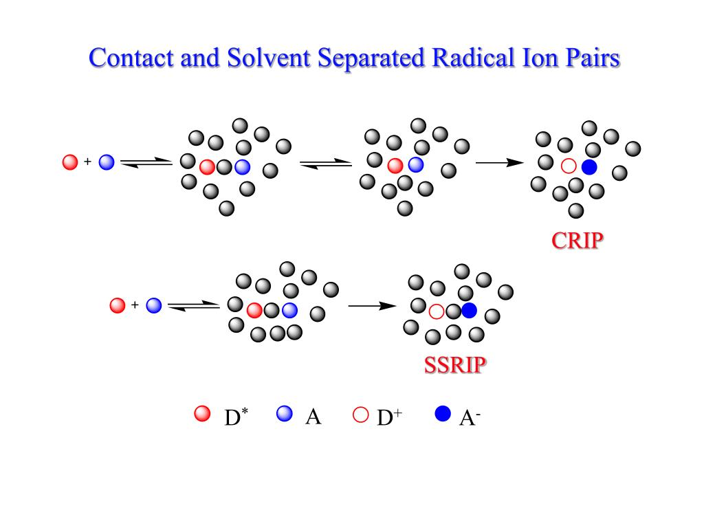 Contact and Solvent Separated Radical Ion Pairs