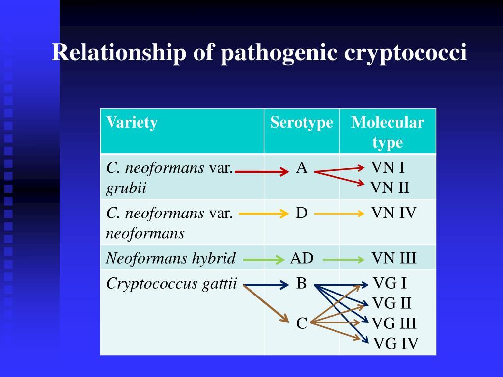 Relationship of pathogenic cryptococci