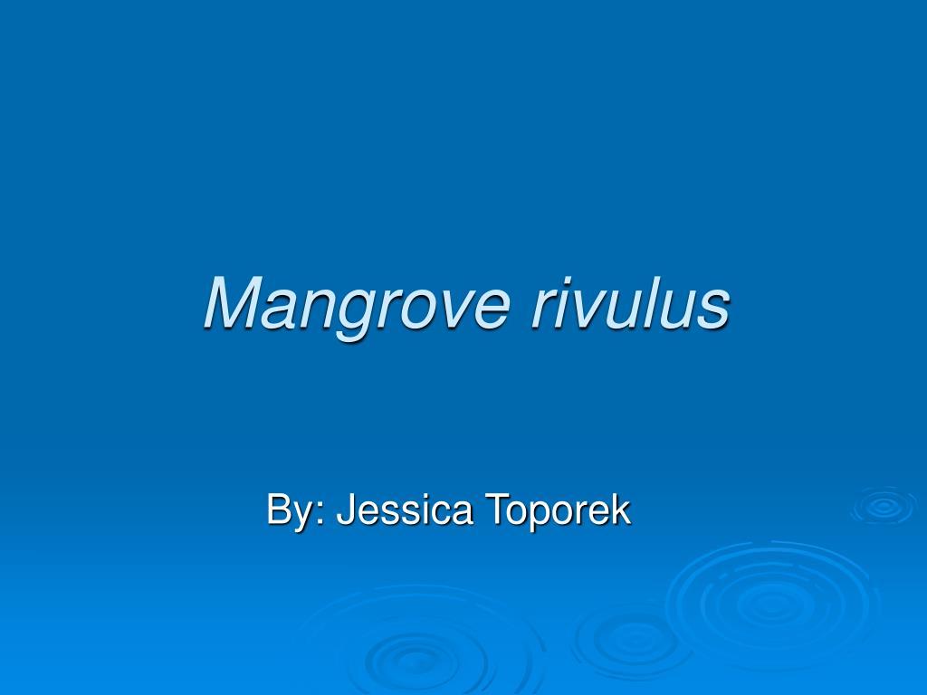 mangrove rivulus