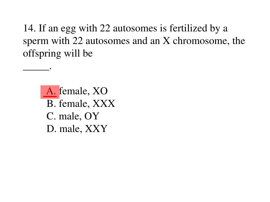 14. If an egg with 22 autosomes is fertilized by a sperm with 22 autosomes and an X chromosome, the offspring will be