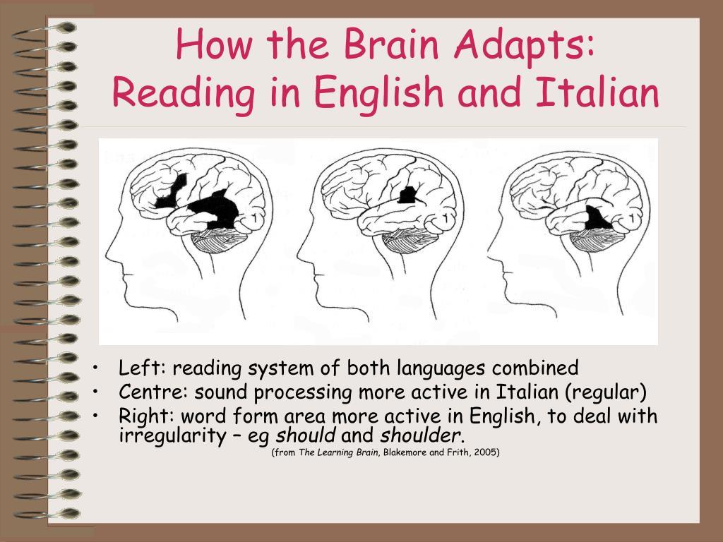 How the Brain Adapts: