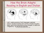 how the brain adapts reading in english and italian