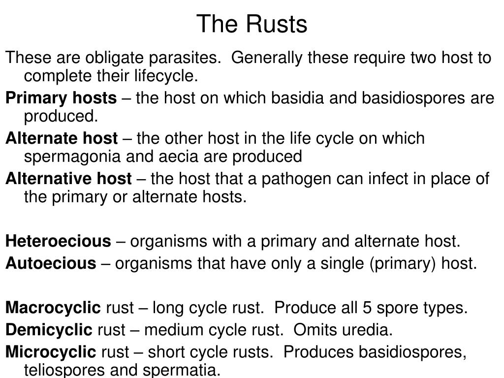 The Rusts