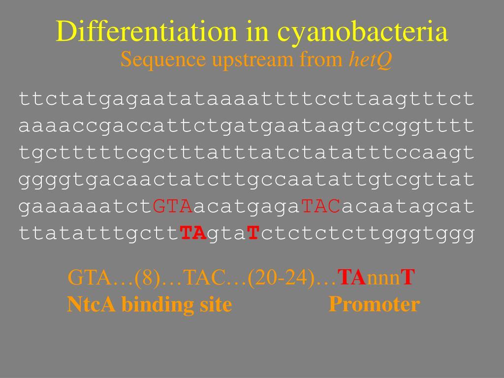 Differentiation in cyanobacteria