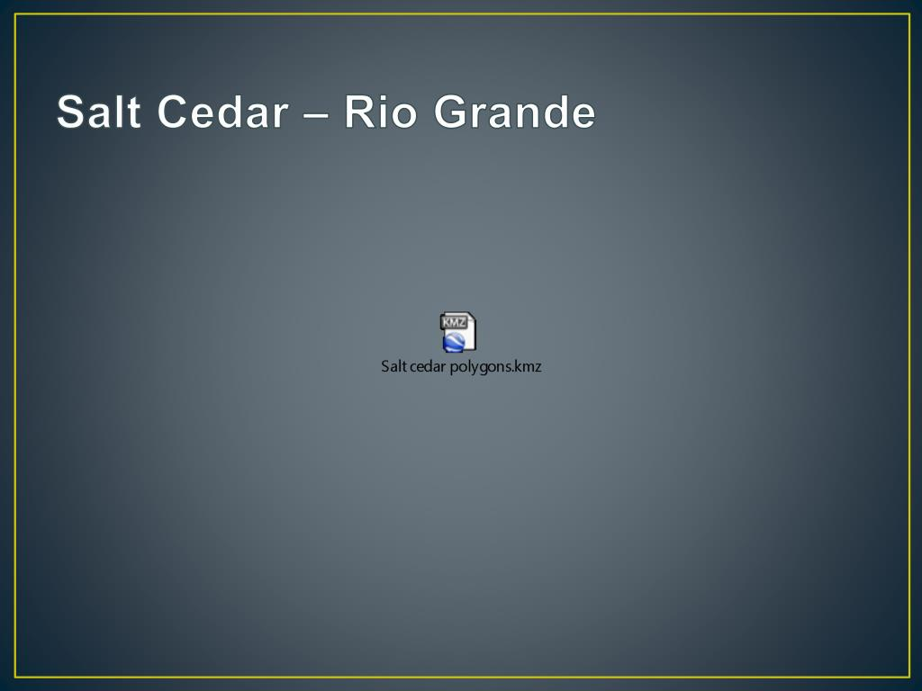 Salt Cedar – Rio Grande