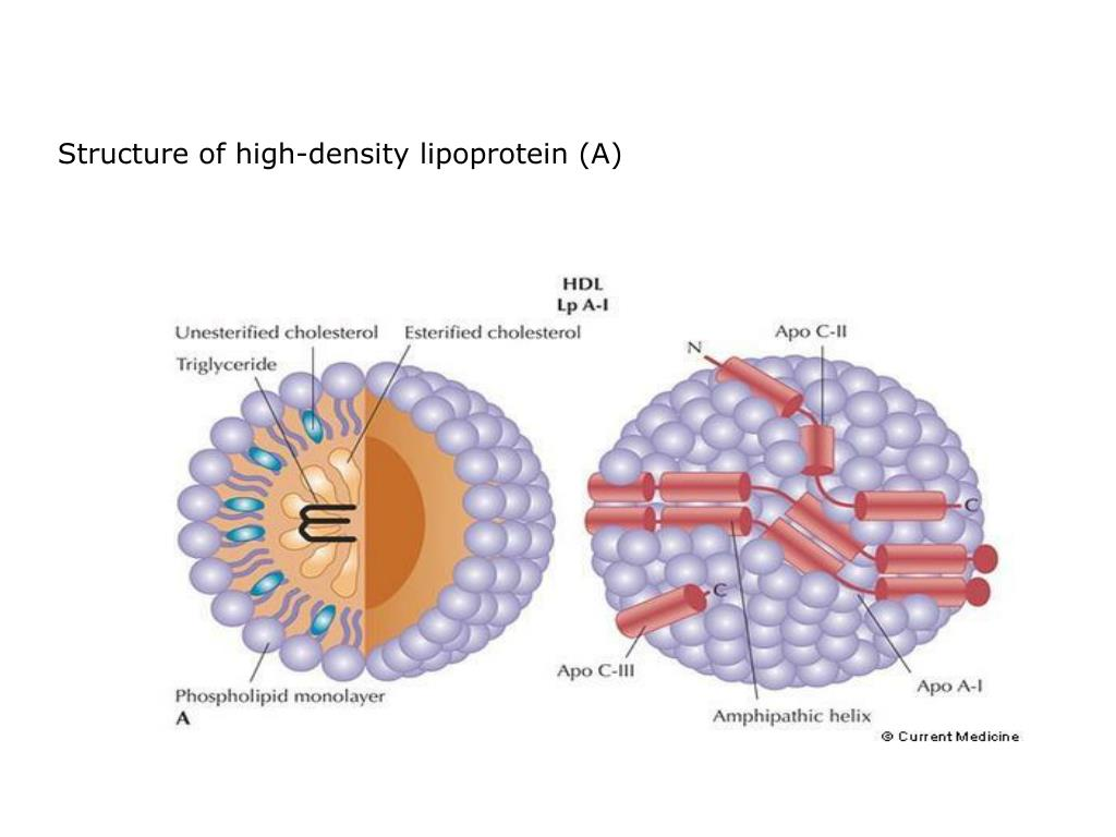 Structure of high-density lipoprotein (A)