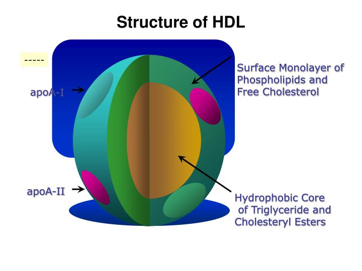 Structure of hdl
