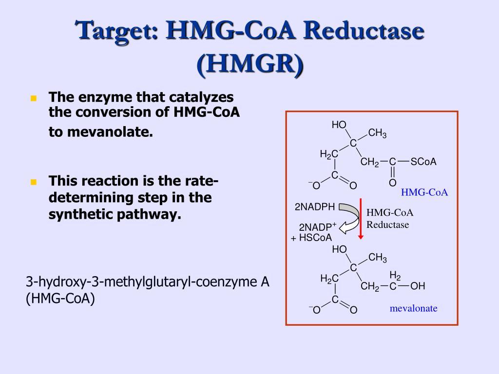Target: HMG-CoA Reductase (HMGR)