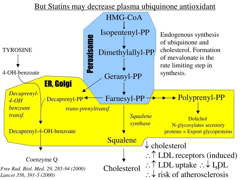 But Statins may decrease plasma ubiquinone antioxidant