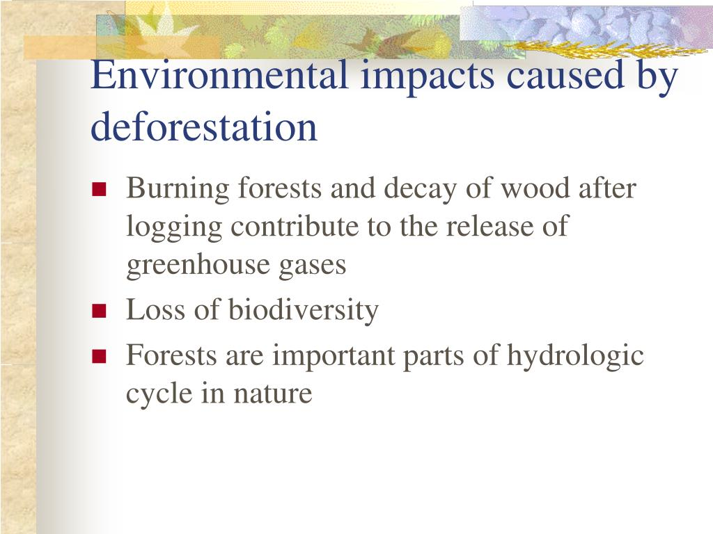 Environmental impacts caused by deforestation