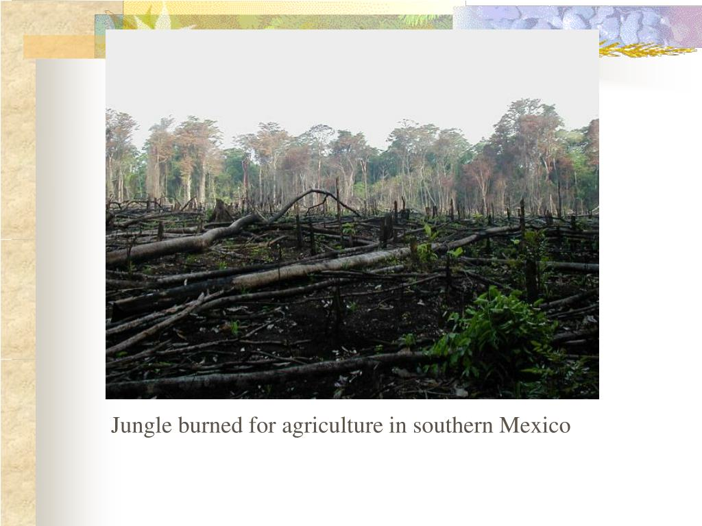 Jungle burned for agriculture in southern Mexico