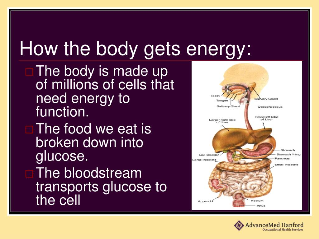 How the body gets energy: